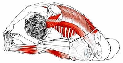 Anatomia e Corso di Formazione Yoga Asana Parivritta Janu Sirsasana