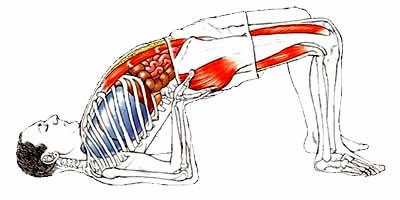 Anatomia e Corso di Formazione Yoga Asana Setu Bandhasana