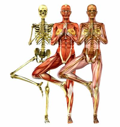 Anatomia e Corso di Formazione Yoga Asana Vrkasana
