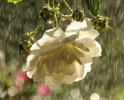 La stessa vibrazione che permette al fiore di sbocciare e profumare